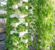 What crops are grown in vertical farms?