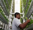 Why is vertical farming better?